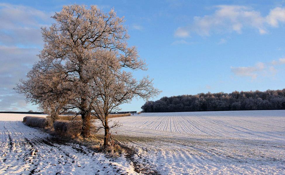 Field patterns near Kimpton-