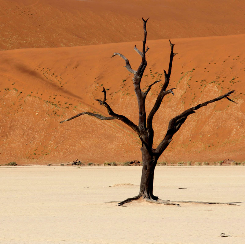 Namibian Desert Tree by Juliet Morton 150