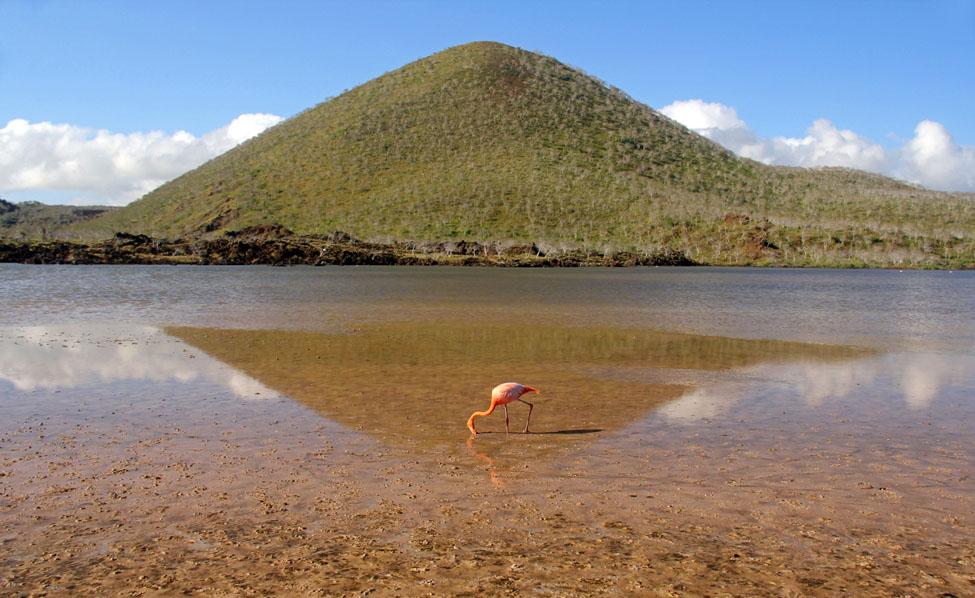 Punta Cormorant Galapagos_5546